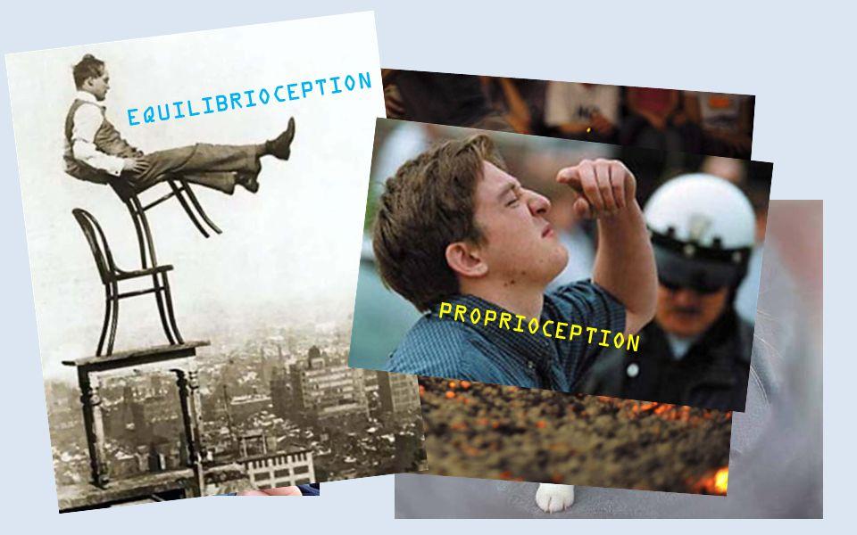NOG MEER? EQUILIBRIOCEPTION PROPRIOCEPTION