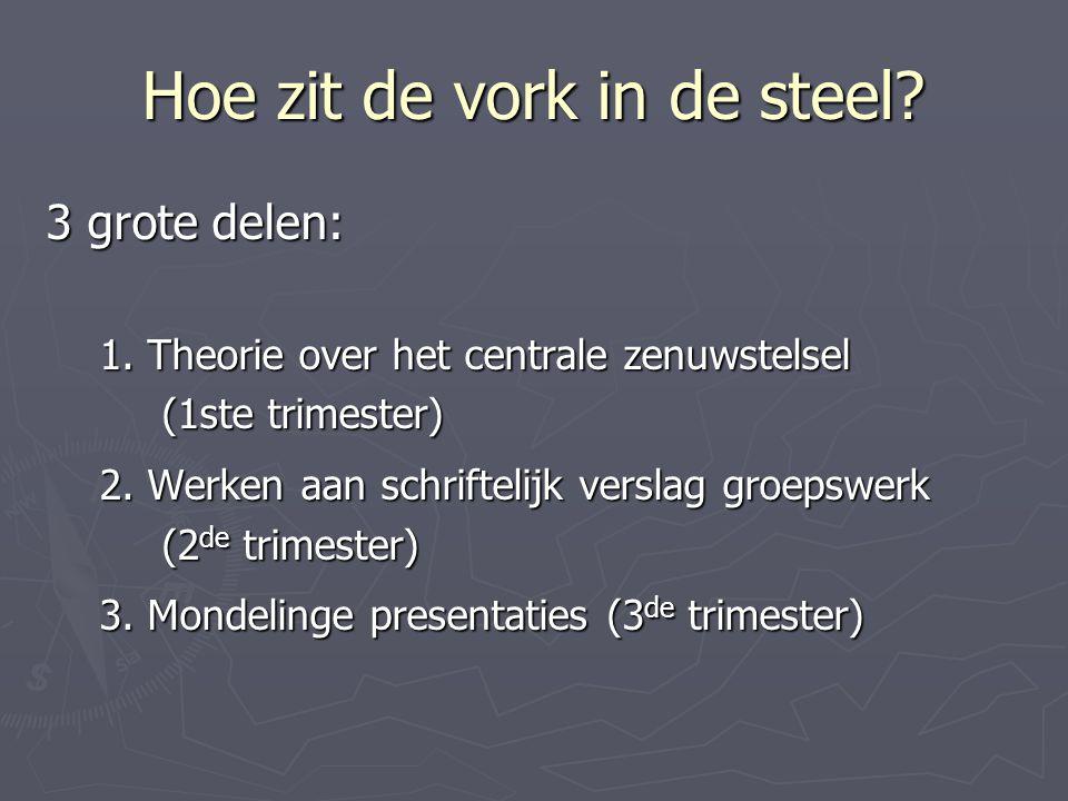 Hoe zit de vork in de steel? 3 grote delen: 1. Theorie over het centrale zenuwstelsel (1ste trimester) 2. Werken aan schriftelijk verslag groepswerk (