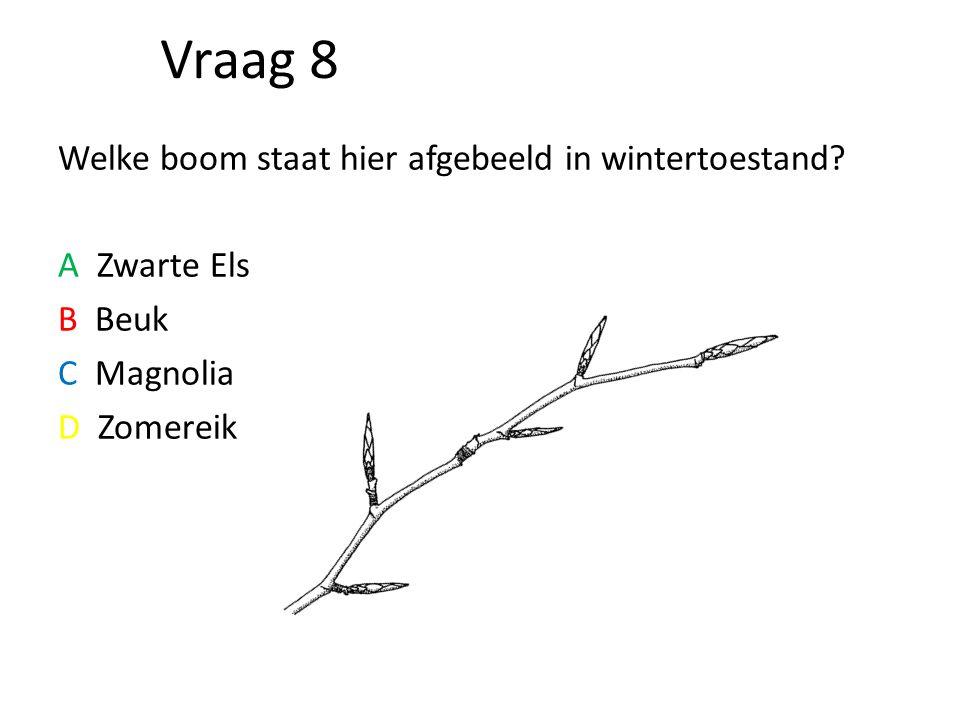 Vraag 8 Welke boom staat hier afgebeeld in wintertoestand? A Zwarte Els B Beuk C Magnolia D Zomereik