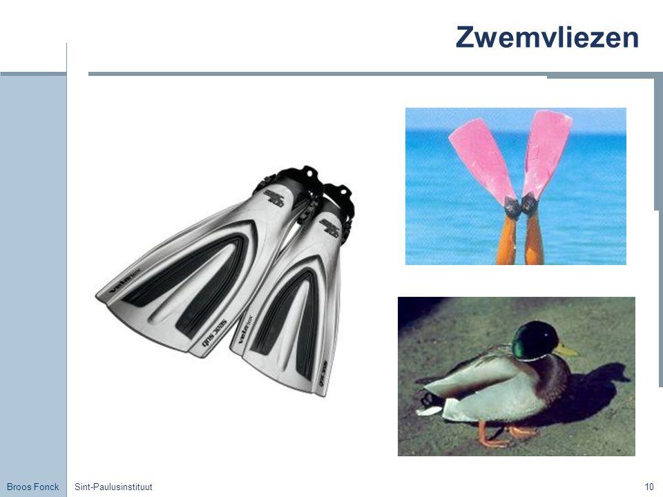Broos Fonck Sint-Paulusinstituut10 Zwemvliezen