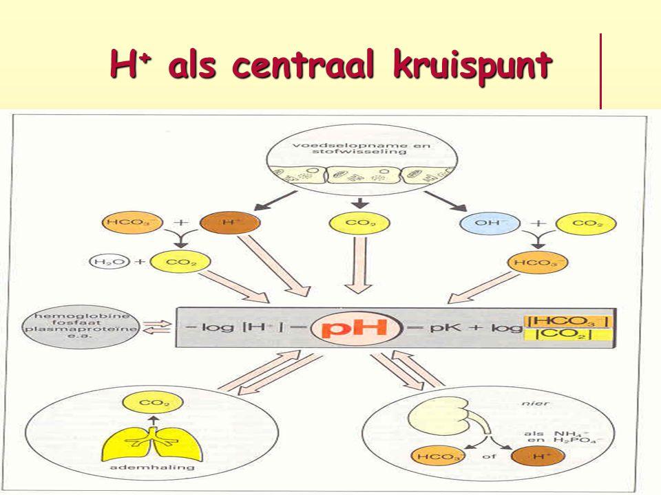 H + als centraal kruispunt