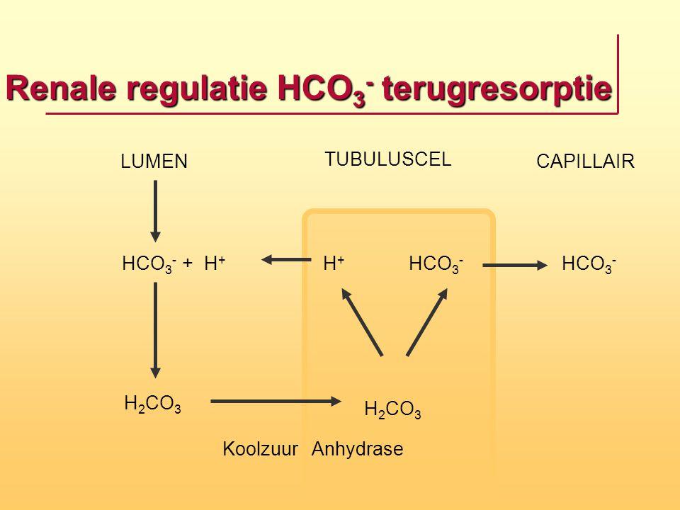 Renale regulatie HCO 3 - terugresorptie H 2 CO 3 HCO 3 - LUMEN TUBULUSCEL CAPILLAIR HCO 3 - + H + H+H+ Koolzuur Anhydrase