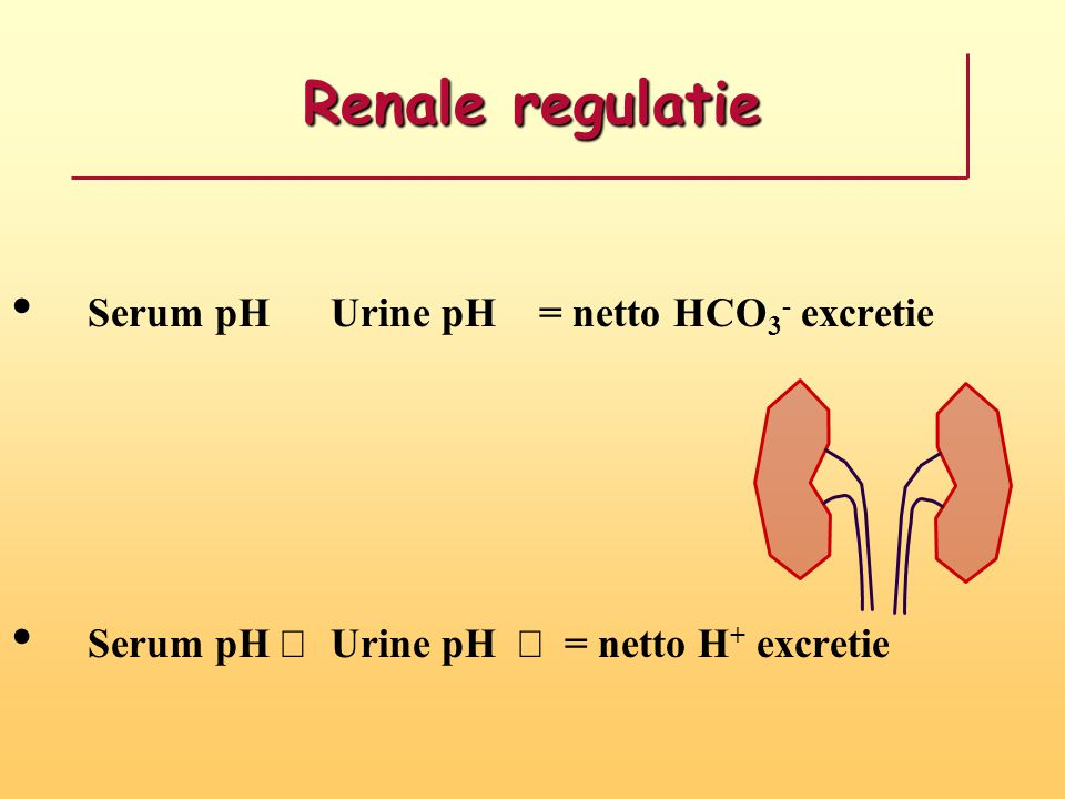 Renale regulatie Serum pH  Urine pH  = netto HCO 3 - excretie Serum pH  Urine pH  = netto H + excretie