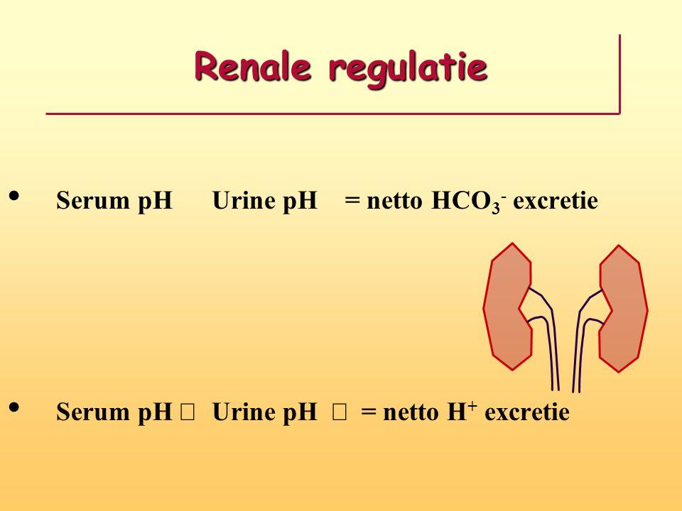 Renale regulatie Serum pH  Urine pH  = netto HCO 3 - excretie Serum pH  Urine pH  = netto H + excretie