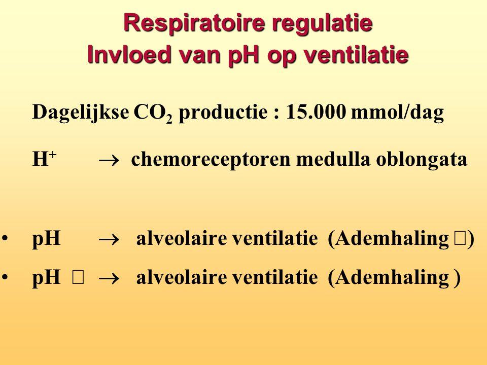 Respiratoire regulatie Invloed van pH op ventilatie Dagelijkse CO 2 productie : 15.000 mmol/dag H +  chemoreceptoren medulla oblongata pH   alveol