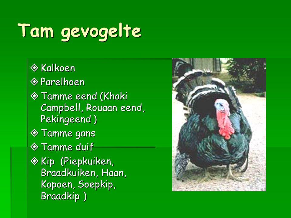 Tam gevogelte  Kalkoen  Parelhoen  Tamme eend (Khaki Campbell, Rouaan eend, Pekingeend )  Tamme gans  Tamme duif  Kip (Piepkuiken, Braadkuiken, Haan, Kapoen, Soepkip, Braadkip )