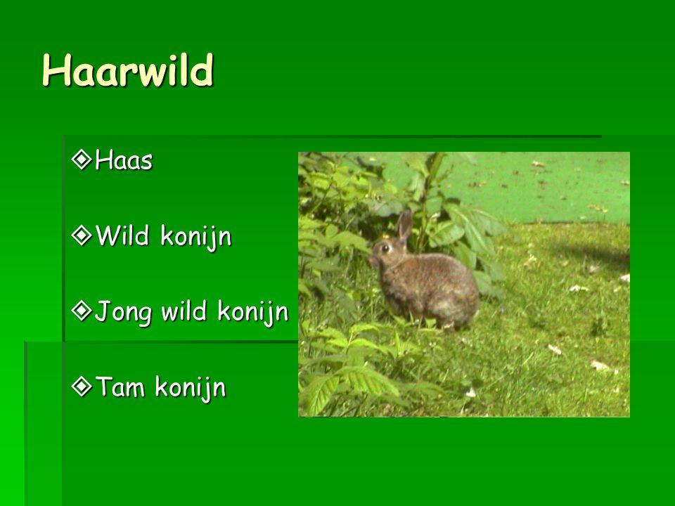 Haarwild  Haas  Wild konijn  Jong wild konijn  Tam konijn