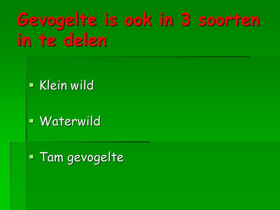 Gevogelte is ook in 3 soorten in te delen  Klein wild  Waterwild  Tam gevogelte