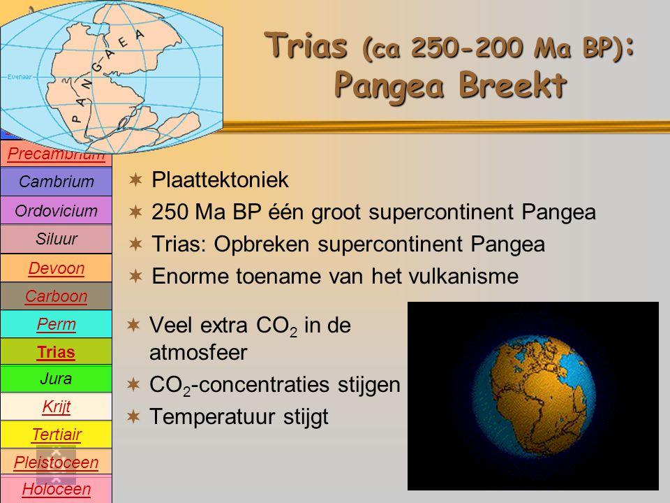 Precambrium Cambrium Devoon Carboon Perm Trias Jura Krijt Tertiair Pleistoceen Holoceen Ordovicium Siluur Oeratmosfeer Trias (ca 250-200 Ma BP) : Pangea Breekt  Plaattektoniek  250 Ma BP één groot supercontinent Pangea  Trias: Opbreken supercontinent Pangea  Enorme toename van het vulkanisme  Veel extra CO 2 in de atmosfeer  CO 2 -concentraties stijgen  Temperatuur stijgt