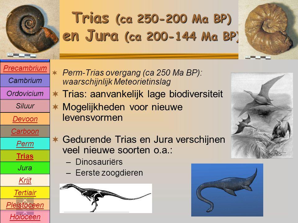 Precambrium Cambrium Devoon Carboon Perm Trias Jura Krijt Tertiair Pleistoceen Holoceen Ordovicium Siluur Oeratmosfeer Trias (ca 250-200 Ma BP) en Jura (ca 200-144 Ma BP)  Perm-Trias overgang (ca 250 Ma BP): waarschijnlijk Meteorietinslag  Trias: aanvankelijk lage biodiversiteit  Mogelijkheden voor nieuwe levensvormen  Gedurende Trias en Jura verschijnen veel nieuwe soorten o.a.: –Dinosauriërs –Eerste zoogdieren