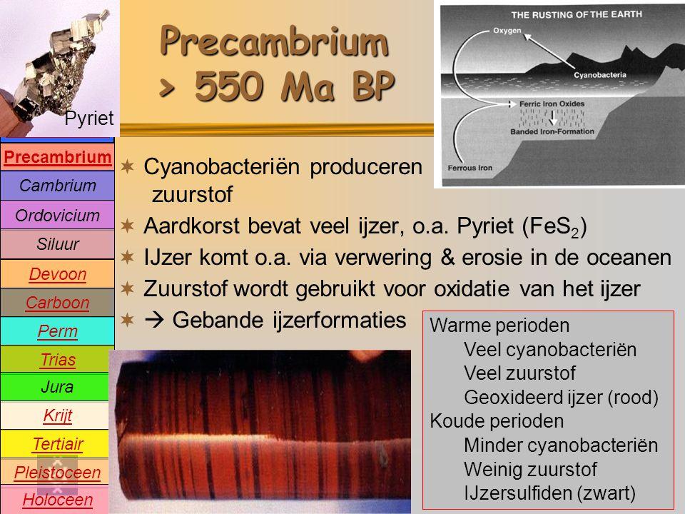 Precambrium Cambrium Devoon Carboon Perm Trias Jura Krijt Tertiair Pleistoceen Holoceen Ordovicium Siluur Oeratmosfeer Precambrium > 550 Ma BP  Cyanobacteriën produceren zuurstof  Aardkorst bevat veel ijzer, o.a.