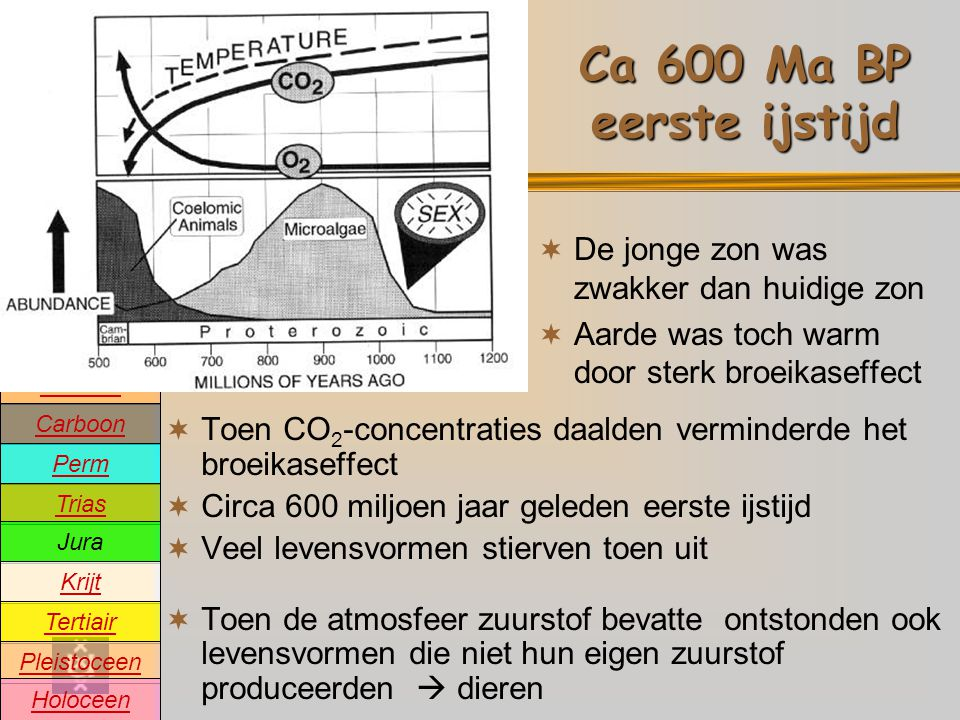 Precambrium Cambrium Devoon Carboon Perm Trias Jura Krijt Tertiair Pleistoceen Holoceen Ordovicium Siluur Oeratmosfeer Devoon en Carboon: Landplanten  Devoon (ca 420-360 Ma BP): ontstaan van de eerste landplanten  Carboon (ca 360-300 Ma BP): heel veel CO 2 wordt aan de atmosfeer onttrokken en wordt de koolstof vastgelegd in dikke pakketten steenkool  CO 2 -concentraties in de atmosfeer dalen voor het eerst onder de 1000 ppm  Nieuwe ijstijd