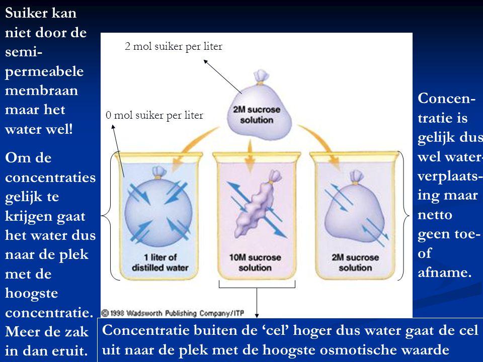 2 mol suiker per liter 0 mol suiker per liter Suiker kan niet door de semi- permeabele membraan maar het water wel! Om de concentraties gelijk te krij
