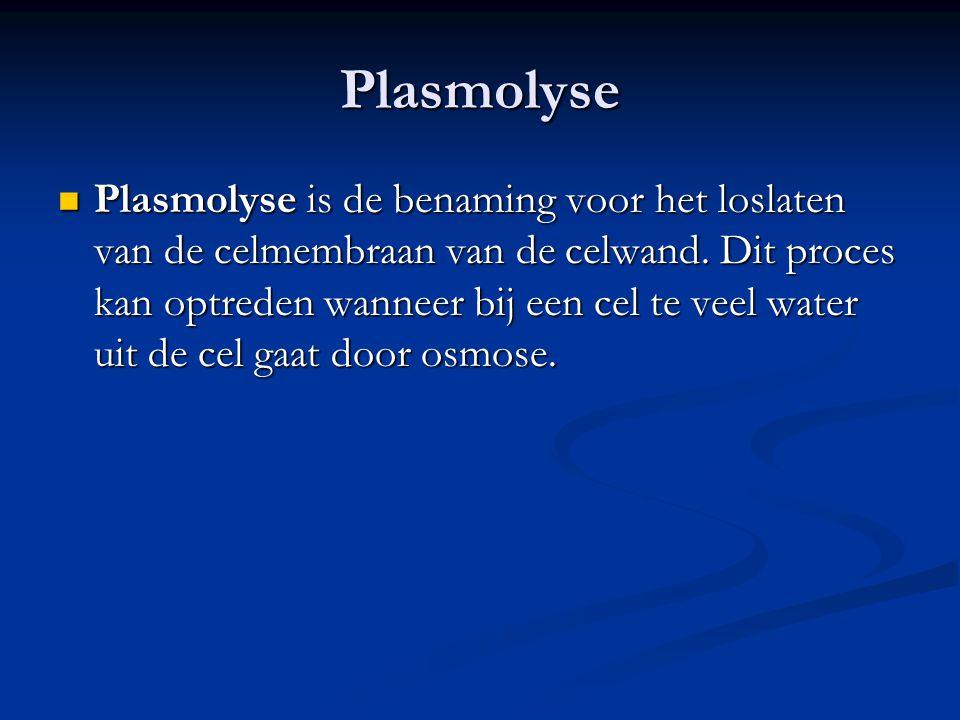 Plasmolyse Plasmolyse is de benaming voor het loslaten van de celmembraan van de celwand. Dit proces kan optreden wanneer bij een cel te veel water ui