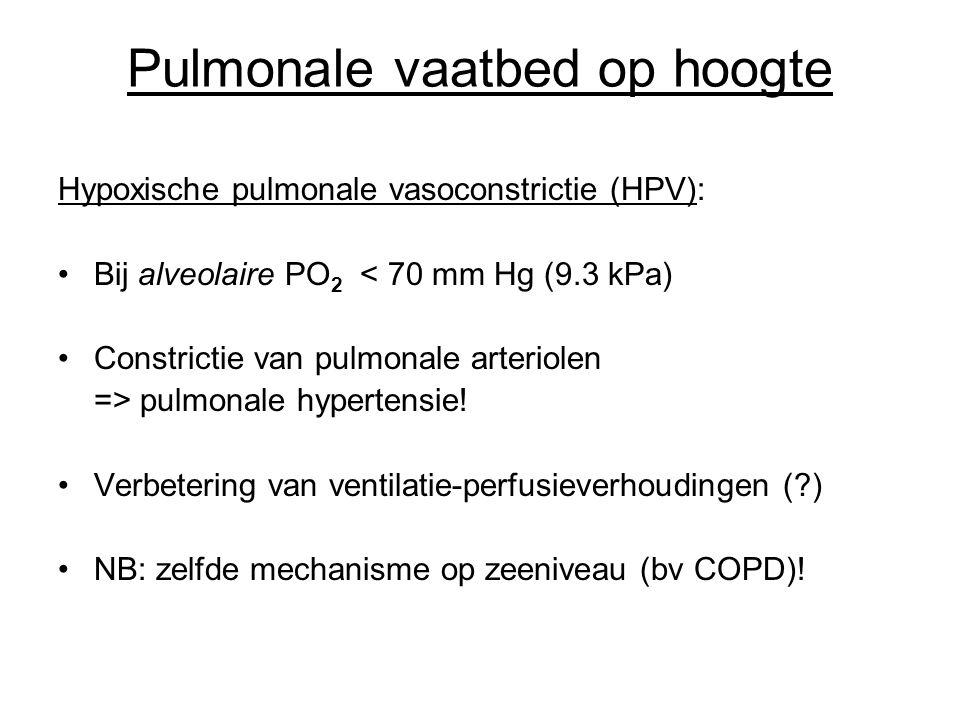 Pulmonale vaatbed op hoogte Hypoxische pulmonale vasoconstrictie (HPV): Bij alveolaire PO 2 < 70 mm Hg (9.3 kPa) Constrictie van pulmonale arteriolen