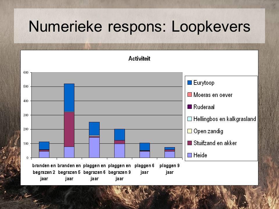 Numerieke respons: Loopkevers