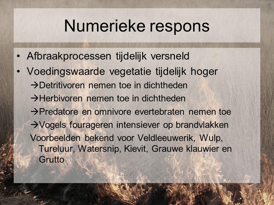 Numerieke respons Afbraakprocessen tijdelijk versneld Voedingswaarde vegetatie tijdelijk hoger  Detritivoren nemen toe in dichtheden  Herbivoren nem