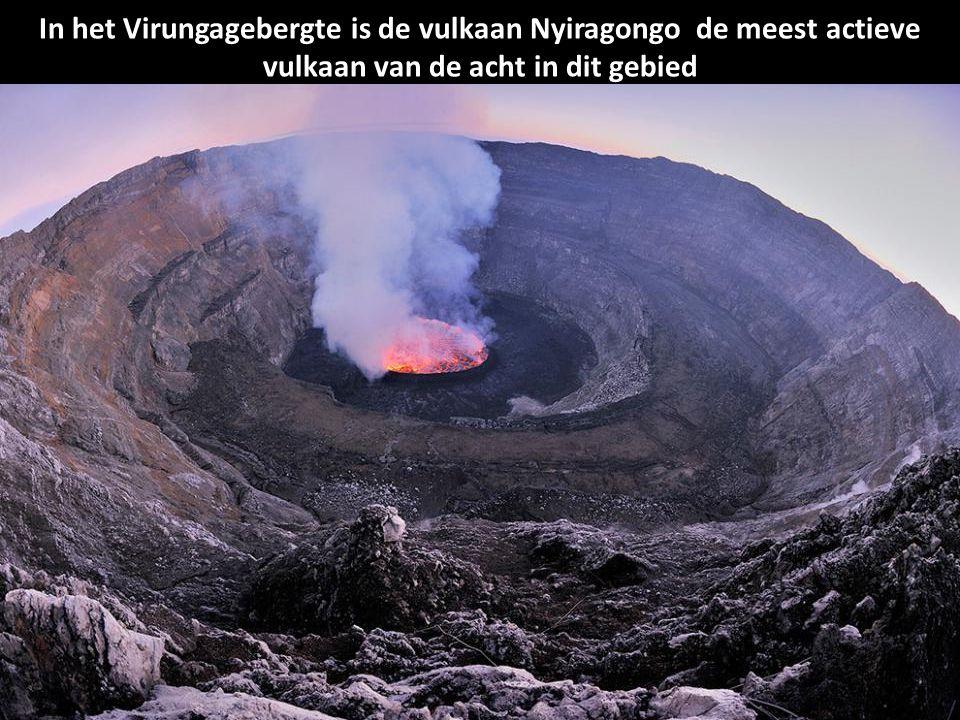 In het Virungagebergte is de vulkaan Nyiragongo de meest actieve vulkaan van de acht in dit gebied