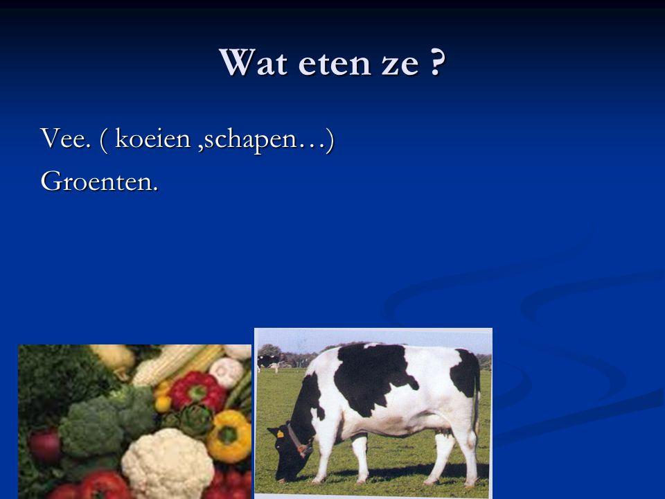 Wat eten ze ? Vee. ( koeien,schapen…) Groenten.