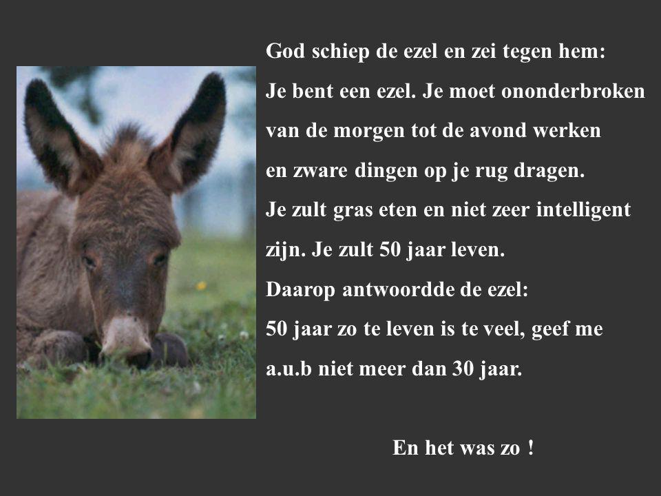 God schiep de ezel en zei tegen hem: Je bent een ezel.