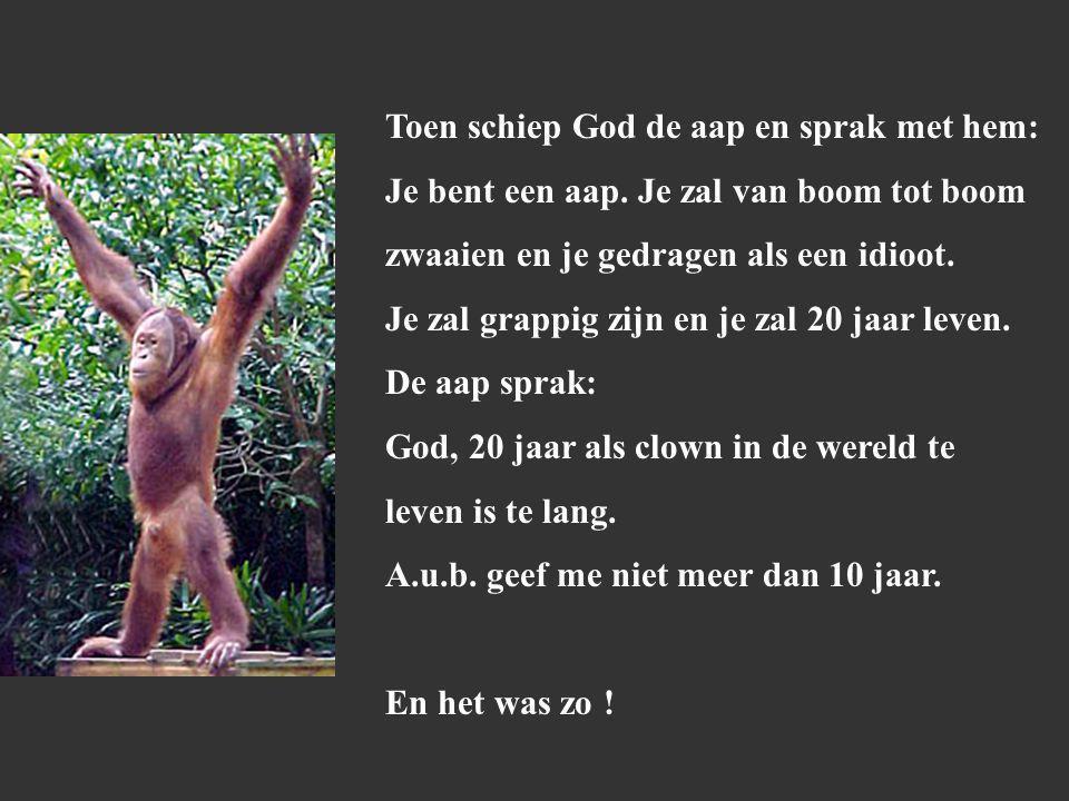 Toen schiep God de aap en sprak met hem: Je bent een aap.