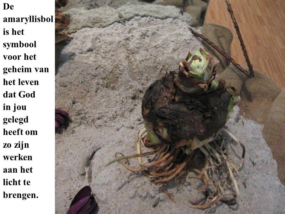 De amaryllisbol is het symbool voor het geheim van het leven dat God in jou gelegd heeft om zo zijn werken aan het licht te brengen.
