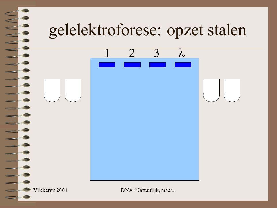 Vliebergh 2004DNA! Natuurlijk, maar... gelelektroforese: opzet stalen 1 2 3