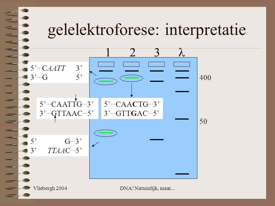 Vliebergh 2004DNA! Natuurlijk, maar... gelelektroforese: interpretatie 5' … CAACTG … 3' 3' … GTTGAC … 5' 5' … CAATTG … 3' 3' … GTTAAC … 5' 5' … CAATT