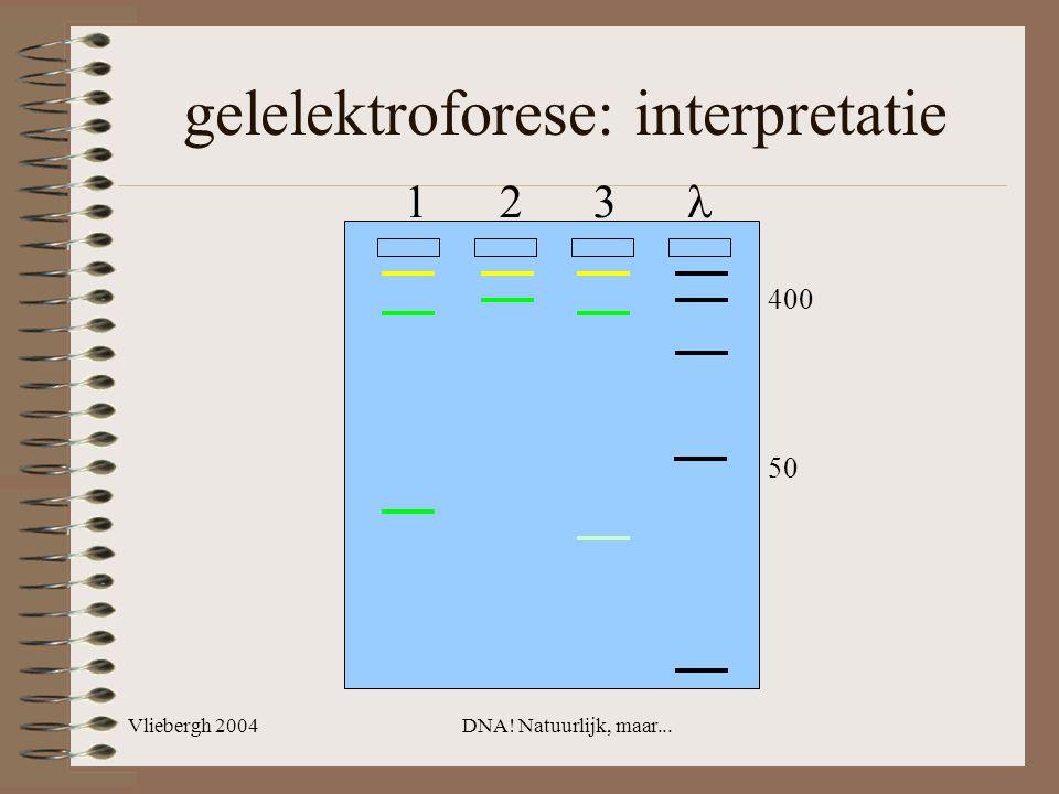 Vliebergh 2004DNA! Natuurlijk, maar... gelelektroforese: interpretatie 1 2 3 400 50