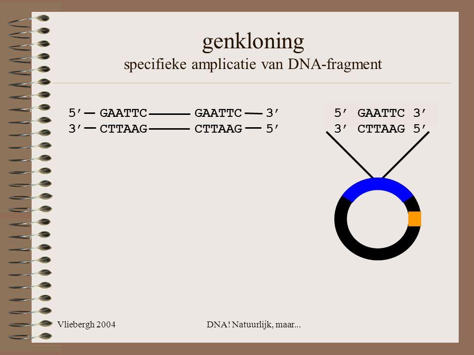 Vliebergh 2004DNA! Natuurlijk, maar... genkloning specifieke amplicatie van DNA-fragment 5' GAATTC GAATTC 3' 3' CTTAAG CTTAAG 5' 5' GAATTC 3' 3' CTTAA