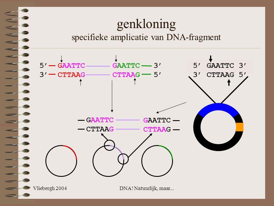 Vliebergh 2004DNA! Natuurlijk, maar... genkloning specifieke amplicatie van DNA-fragment 5' GAATTC GAATTC 3' 3' CTTAAG CTTAAG 5' GAATTC CTTAAG GAATTC