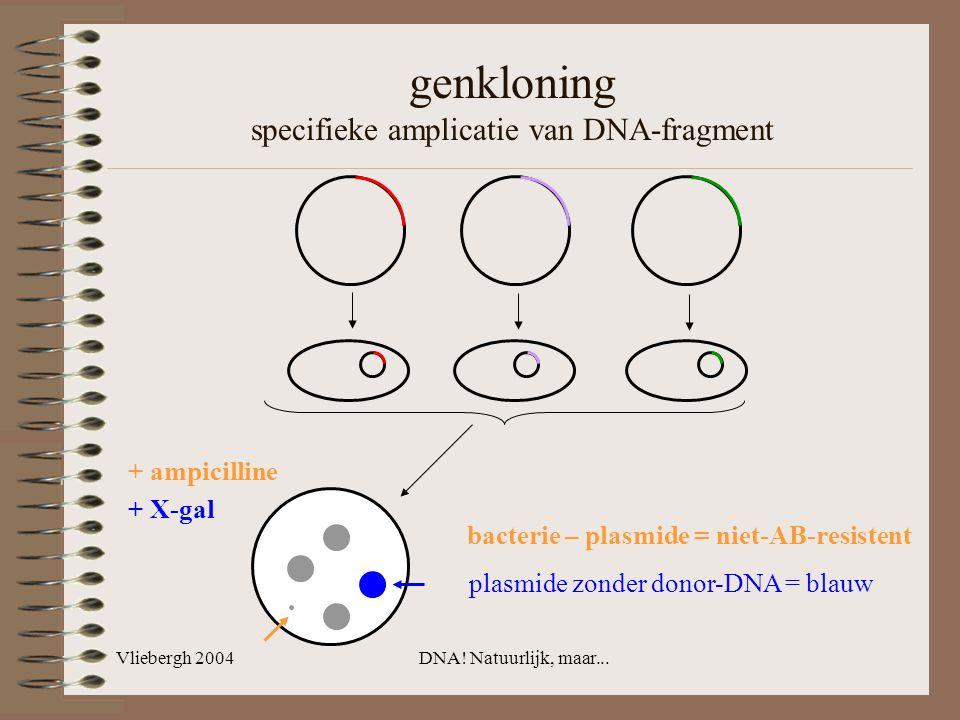 Vliebergh 2004DNA! Natuurlijk, maar... genkloning specifieke amplicatie van DNA-fragment + ampicilline + X-gal bacterie – plasmide = niet-AB-resistent