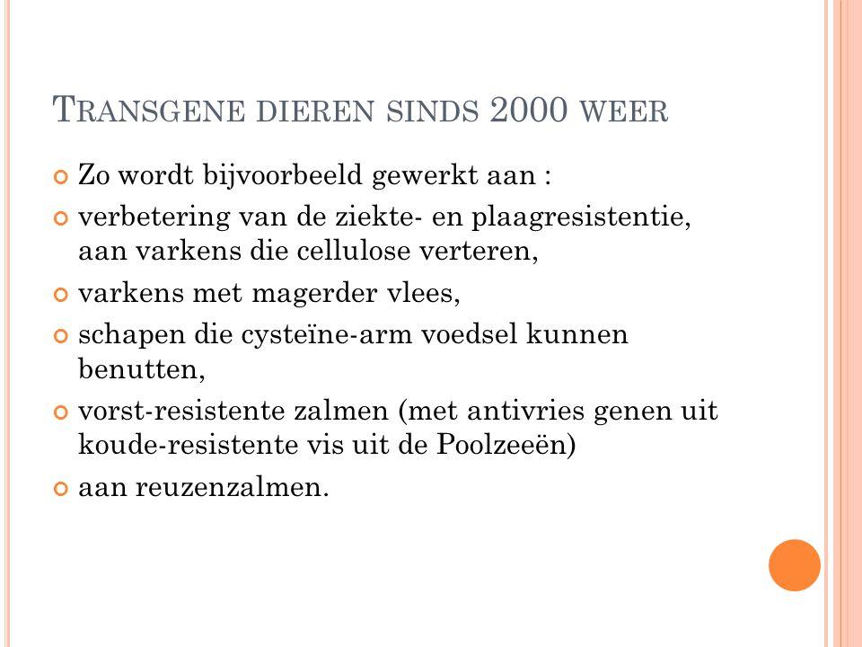 T RANSGENE DIEREN SINDS 2000 WEER Zo wordt bijvoorbeeld gewerkt aan : verbetering van de ziekte- en plaagresistentie, aan varkens die cellulose verter