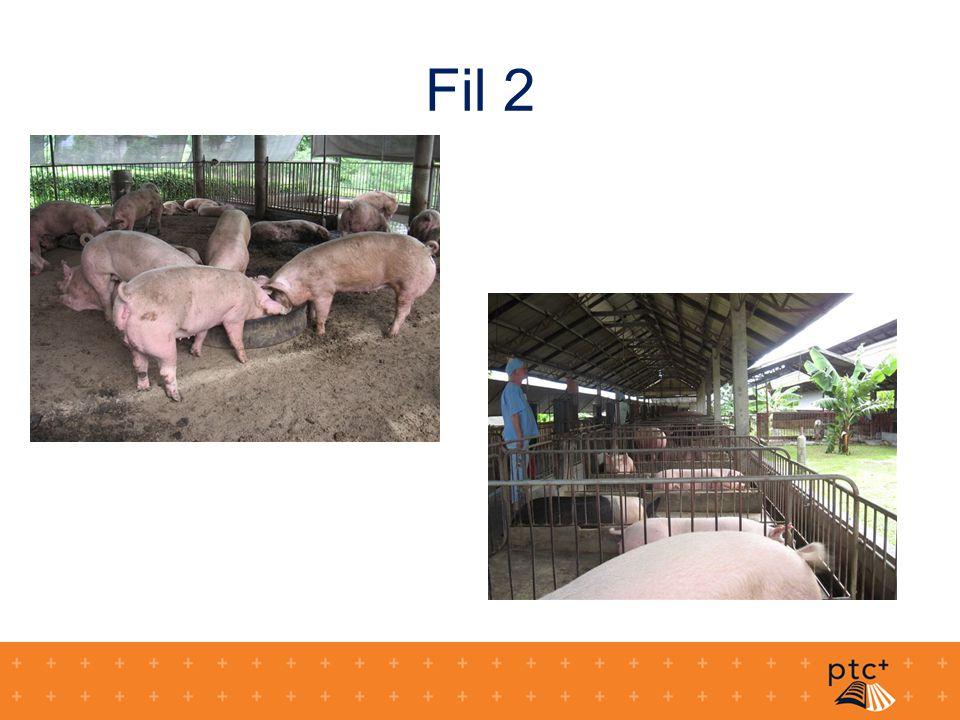 Fil 3