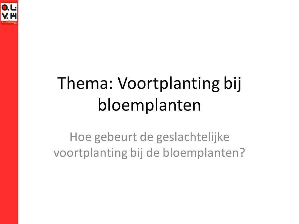 Thema: Voortplanting bij bloemplanten Hoe gebeurt de geslachtelijke voortplanting bij de bloemplanten?