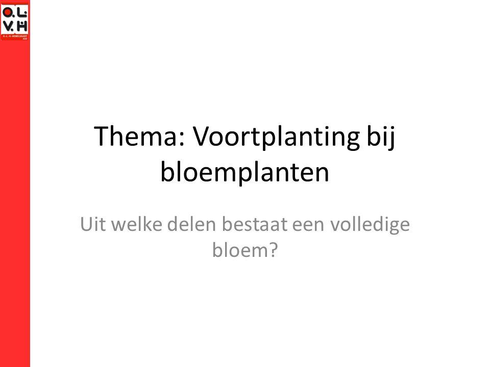 Thema: Voortplanting bij bloemplanten Uit welke delen bestaat een volledige bloem?