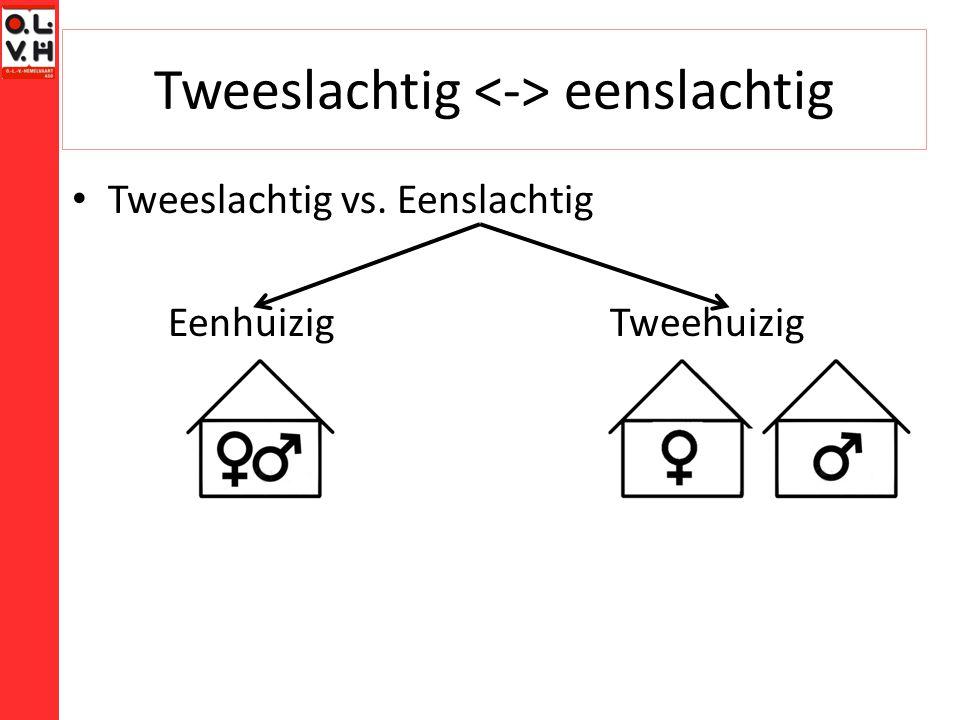 Tweeslachtig eenslachtig Tweeslachtig vs. Eenslachtig Eenhuizig Tweehuizig