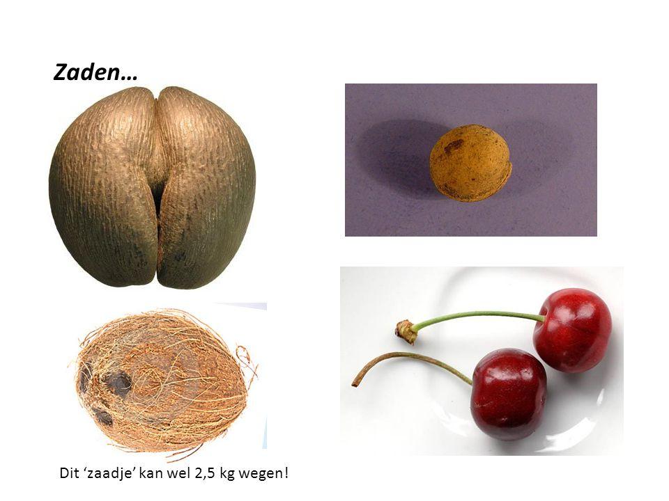Zaden… Sommige zijn groot En zwaar Andere zijn veel kleiner Dit 'zaadje' kan wel 2,5 kg wegen!