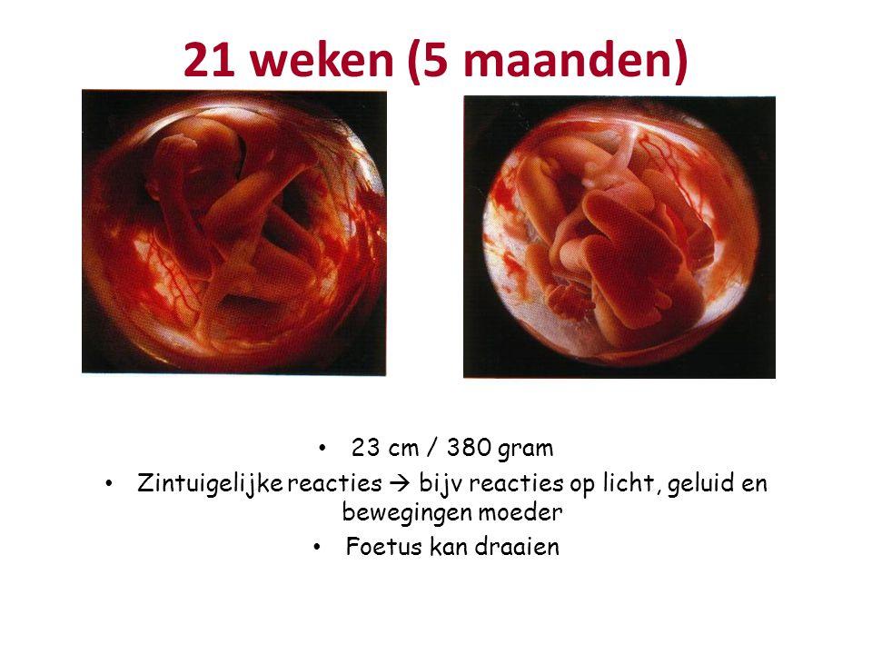 21 weken (5 maanden) 23 cm / 380 gram Zintuigelijke reacties  bijv reacties op licht, geluid en bewegingen moeder Foetus kan draaien