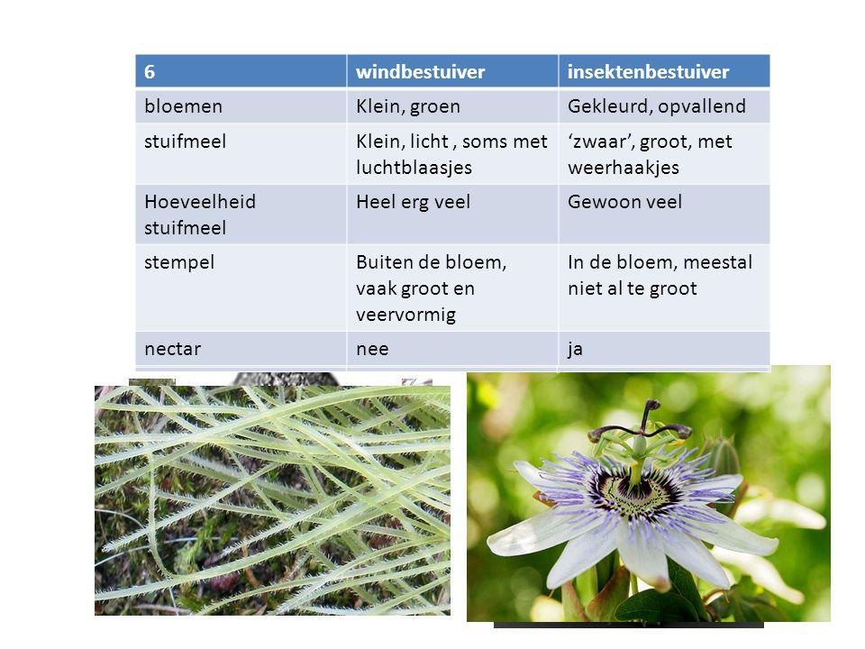 1 insektenbestuiver 2windbestuiverinsektenbestuiver bloemenKlein, groenGekleurd, opvallend 3windbestuiverinsektenbestuiver bloemenKlein, groenGekleurd, opvallend stuifmeelKlein, licht, soms met luchtblaasjes 'zwaar', groot, met weerhaakjes 4windbestuiverinsektenbestuiver bloemenKlein, groenGekleurd, opvallend stuifmeelKlein, licht, soms met luchtblaasjes 'zwaar', groot, met weerhaakjes Hoeveelheid stuifmeel Heel erg veelGewoon veel 5windbestuiverinsektenbestuiver bloemenKlein, groenGekleurd, opvallend stuifmeelKlein, licht, soms met luchtblaasjes 'zwaar', groot, met weerhaakjes Hoeveelheid stuifmeel Heel erg veelGewoon veel stempelBuiten de bloem, vaak groot en veervormig In de bloem, meestal niet al te groot 6windbestuiverinsektenbestuiver bloemenKlein, groenGekleurd, opvallend stuifmeelKlein, licht, soms met luchtblaasjes 'zwaar', groot, met weerhaakjes Hoeveelheid stuifmeel Heel erg veelGewoon veel stempelBuiten de bloem, vaak groot en veervormig In de bloem, meestal niet al te groot nectarneeja