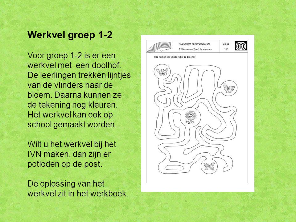 Werkvel groep 1-2 Voor groep 1-2 is er een werkvel met een doolhof. De leerlingen trekken lijntjes van de vlinders naar de bloem. Daarna kunnen ze de