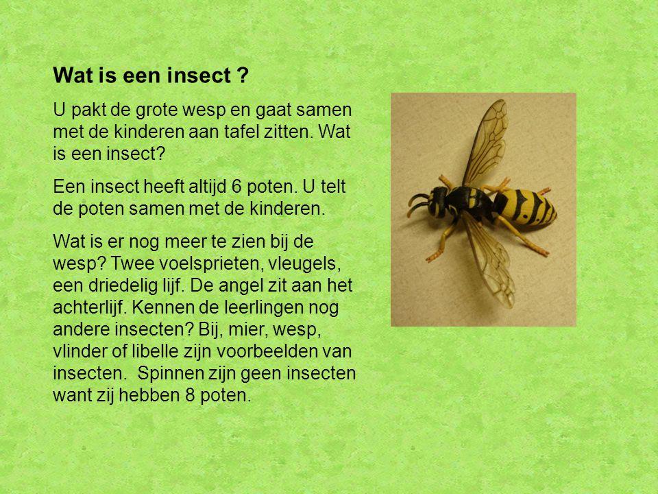 Wat is een insect ? U pakt de grote wesp en gaat samen met de kinderen aan tafel zitten. Wat is een insect? Een insect heeft altijd 6 poten. U telt de