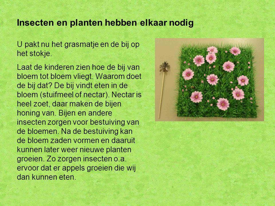 Insecten en planten hebben elkaar nodig U pakt nu het grasmatje en de bij op het stokje. Laat de kinderen zien hoe de bij van bloem tot bloem vliegt.