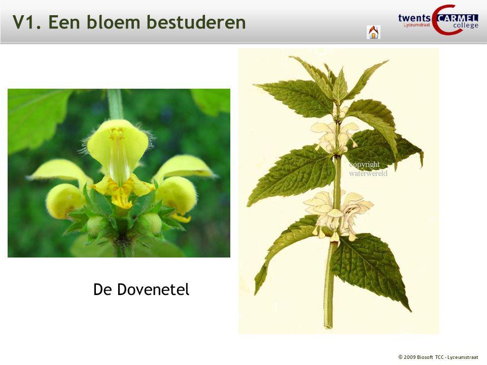 © 2009 Biosoft TCC - Lyceumstraat V1. Een bloem bestuderen De Dovenetel