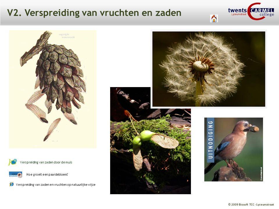 © 2009 Biosoft TCC - Lyceumstraat V2. Verspreiding van vruchten en zaden Hoe groeit een paardebloem? Verspreiding van zaden door de muis Verspreiding