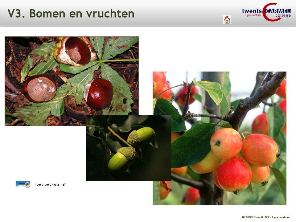 © 2009 Biosoft TCC - Lyceumstraat V3. Bomen en vruchten Hoe groeit kastanje?