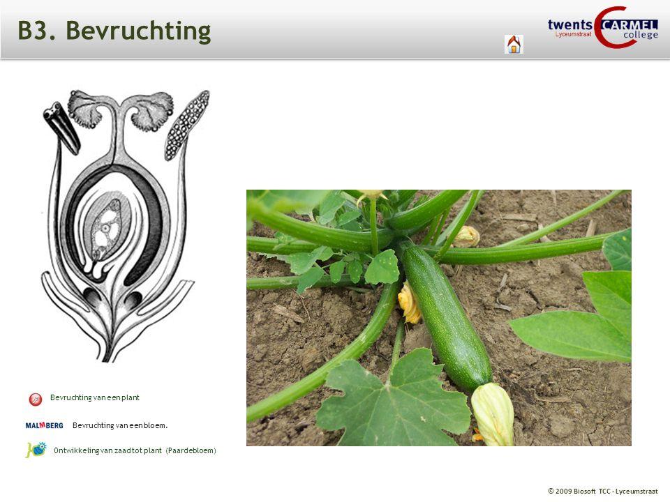 © 2009 Biosoft TCC - Lyceumstraat B3. Bevruchting Bevruchting van een plant Bevruchting van een bloem. Ontwikkeling van zaad tot plant (Paardebloem)