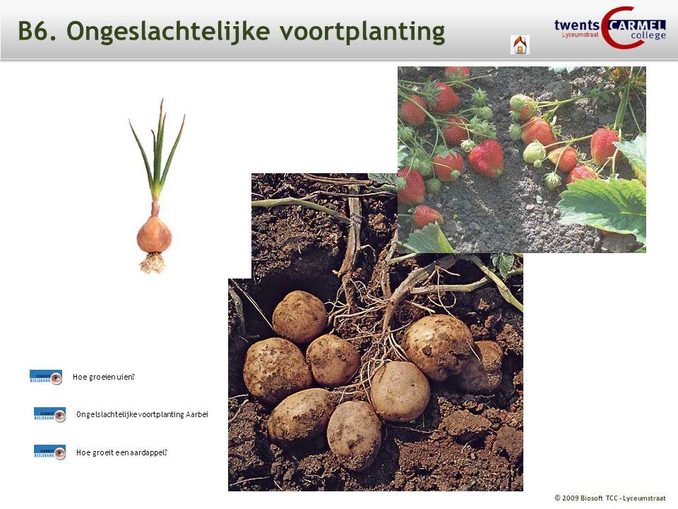 © 2009 Biosoft TCC - Lyceumstraat B6. Ongeslachtelijke voortplanting Ongelslachtelijke voortplanting Aarbei Hoe groeit een aardappel? Hoe groeien uien