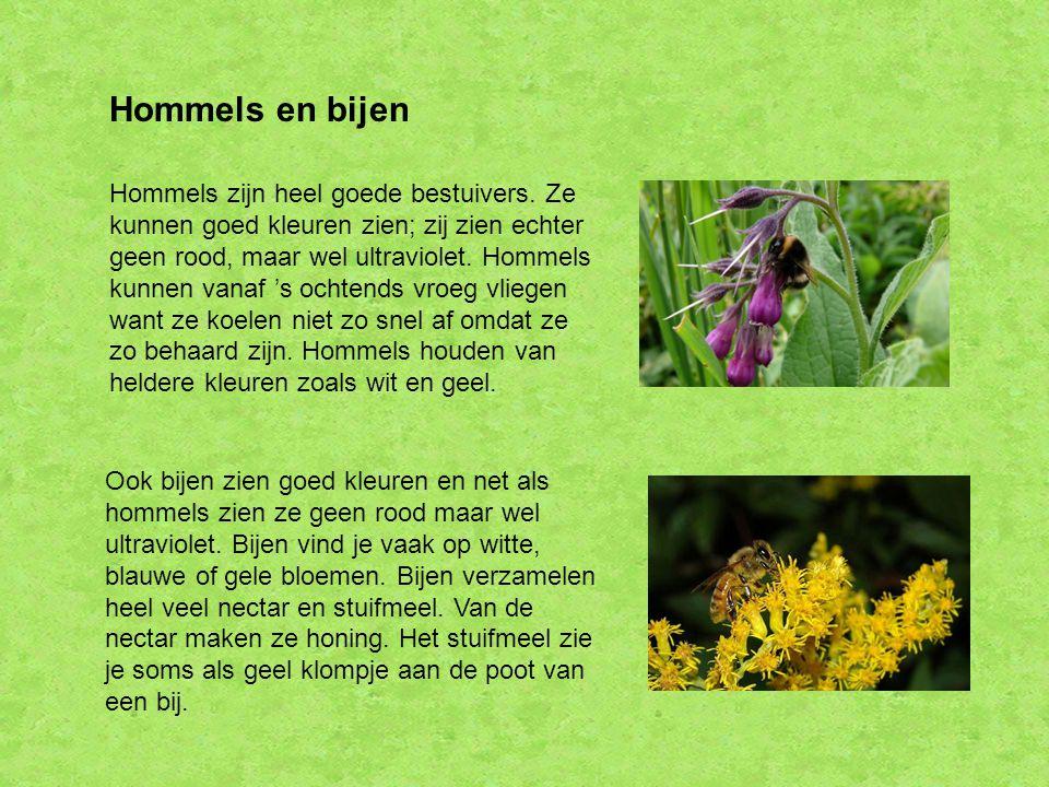 Hommels en bijen Hommels zijn heel goede bestuivers. Ze kunnen goed kleuren zien; zij zien echter geen rood, maar wel ultraviolet. Hommels kunnen vana