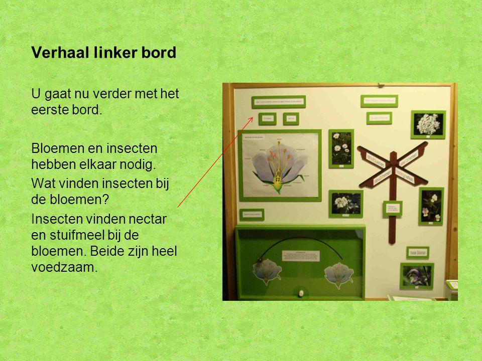 Verhaal linker bord U gaat nu verder met het eerste bord. Bloemen en insecten hebben elkaar nodig. Wat vinden insecten bij de bloemen? Insecten vinden